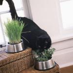 【ハーブガーデンアイデア】猫ちゃん大好きハーブの生えたキャットディッシュ