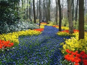 ちょっと花見にオランダまで、と言いたくなるくらい圧巻の花の公園