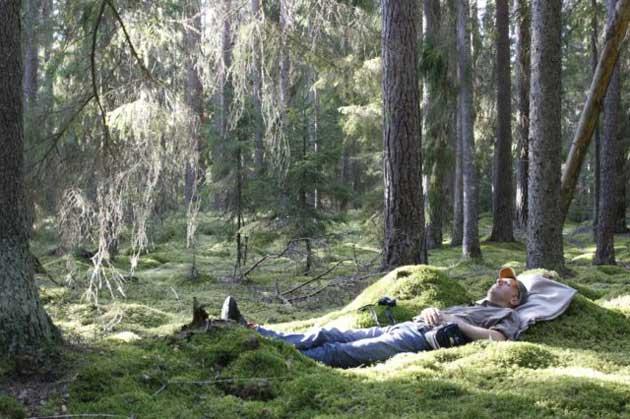 スウェーデンエコロッジ3