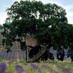 夢の世界にいるような一面ラベンダー畑のツリーハウスホテル