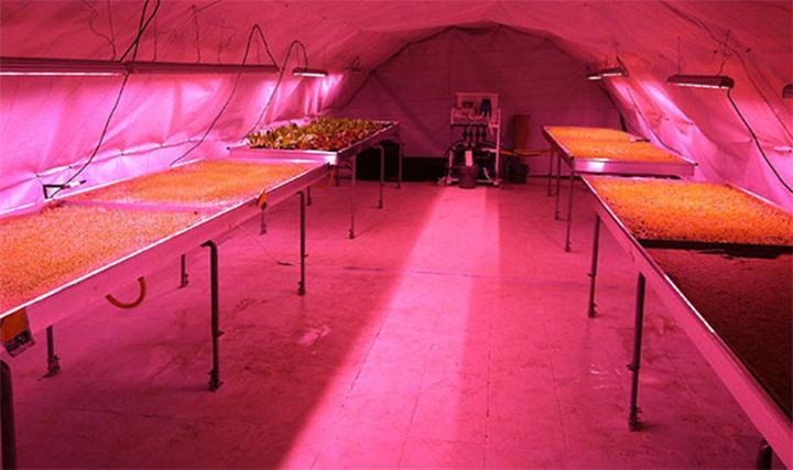 トンネルを使った植物栽培1