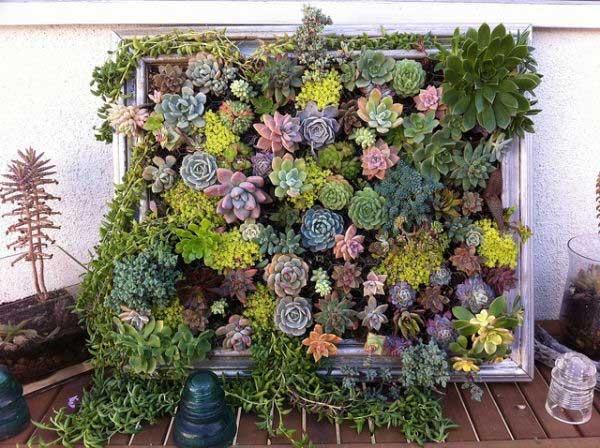 リビングウォールの垂直ガーデン多肉植物DIY