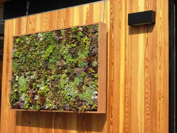 リビングウォールの垂直ガーデンモジュラーオプション2