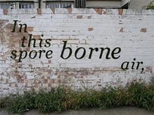 あなたのお家の壁に苔のアート(モスグラフィティ)はいかが?