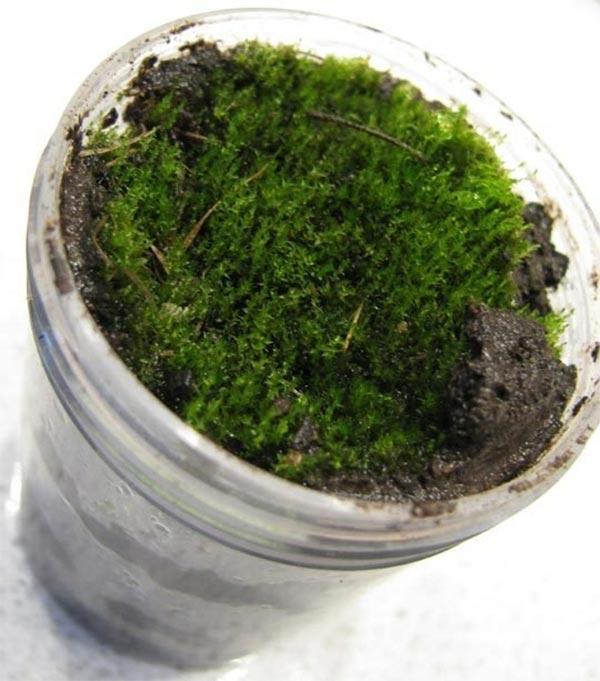 苔のアートモスグラフィティ苔の採取