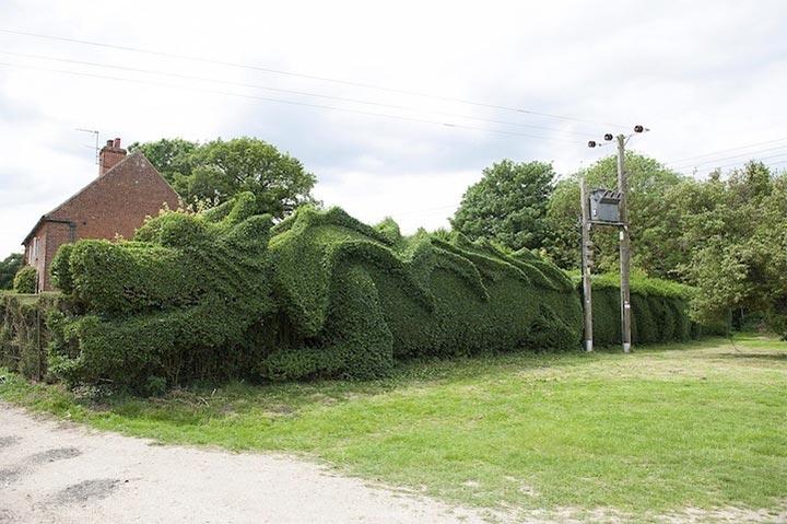 引退したイギリス人が剪定した巨大ドラゴン