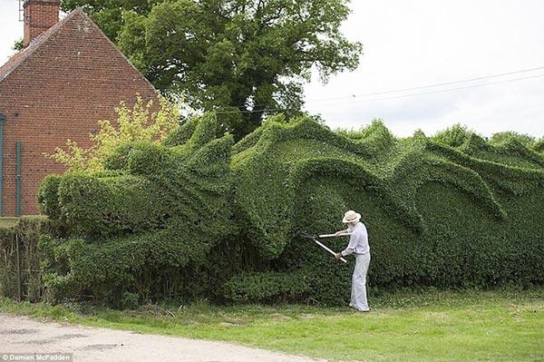 引退したイギリス人が剪定した巨大ドラゴン作業風景