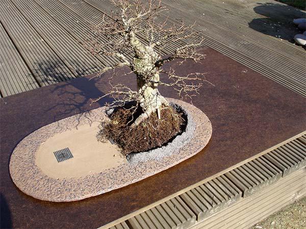 盆栽とエルフの融合台に盆栽