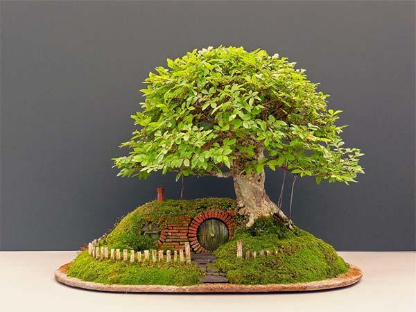 盆栽とエルフの融合完成
